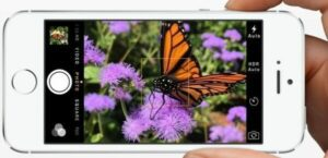A landscape photo of a butterfly on an iPhone taken with volume button