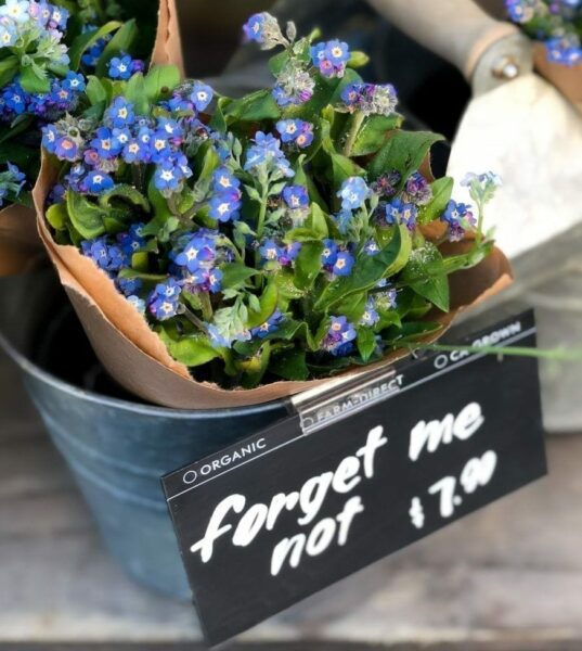 forget me not plant, make learning stick