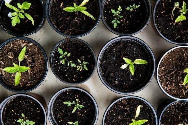 Line of pots with little plants