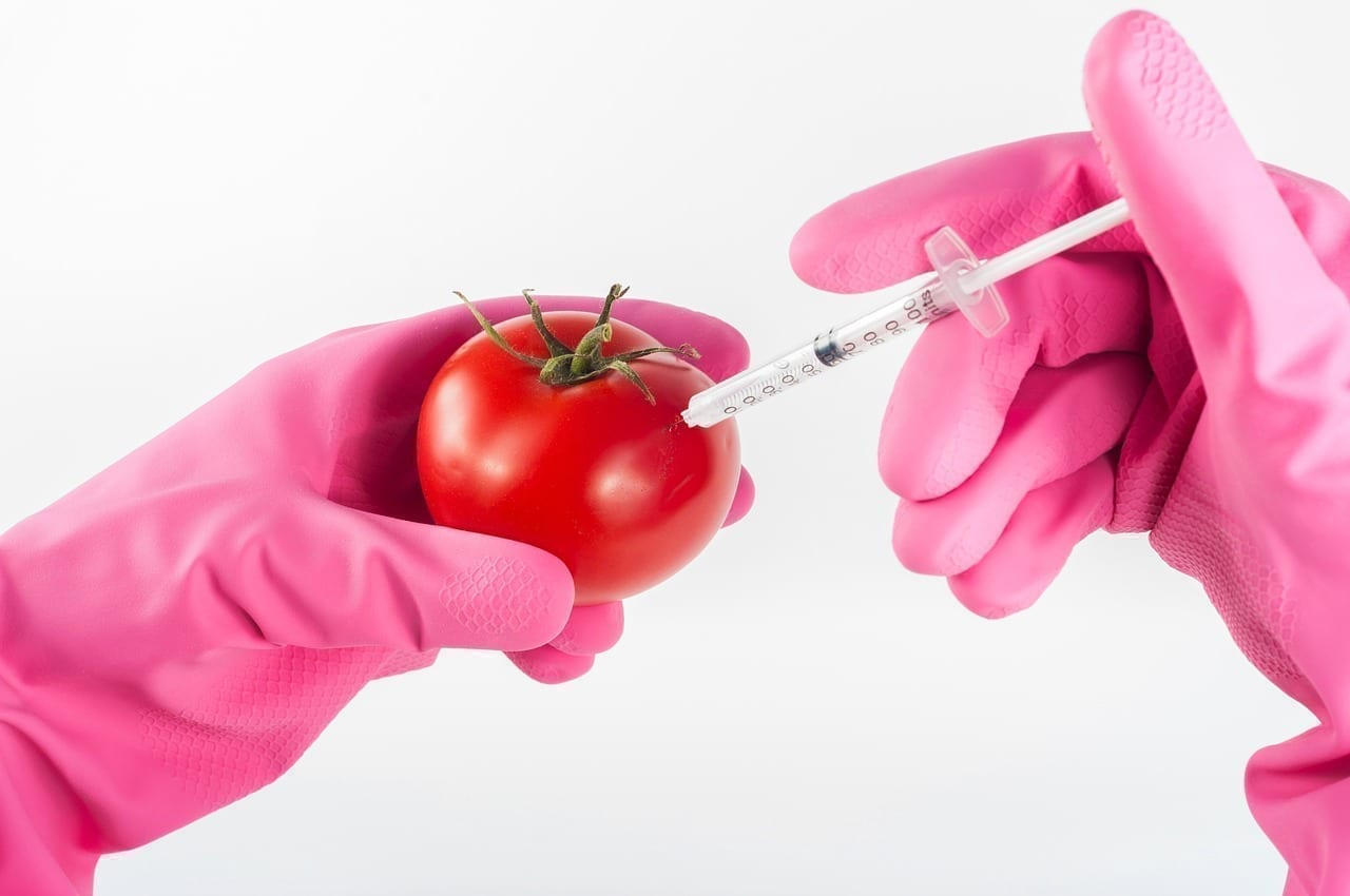 Food safety, genetically modified tomato