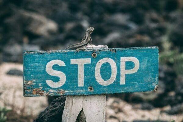 Stop sign, lizard