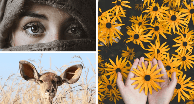 3 pictures - a woman's eyes, a deer's head and hands holding yellow flowers