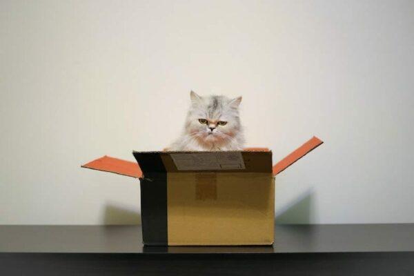 Grumpy looking cat sat in an open cardboard box