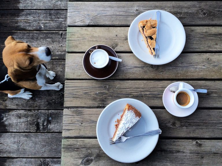 Dog sat on floor looking at table full of food above him