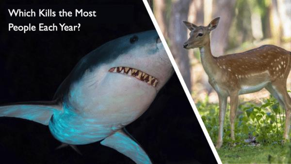 Shark / Deer, Influencing skills
