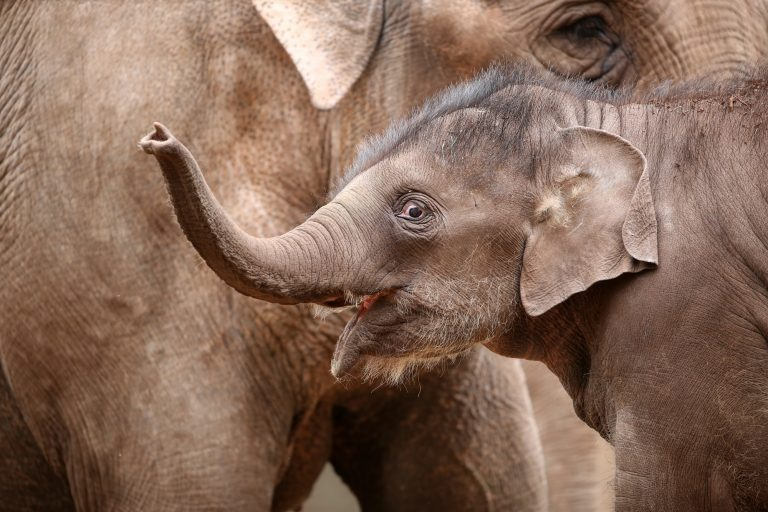 Close up photo of a baby elephant