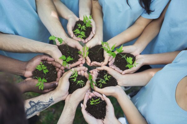 A group of hands holding seedlings