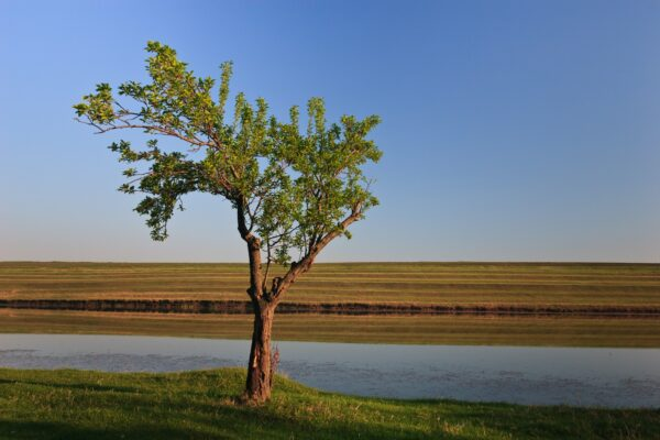 Wide shot of a single tree on the water